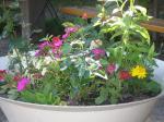 Blommande sommargård
