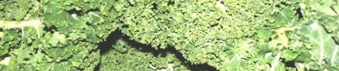 grönkålfeat