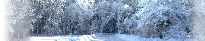 vintervit