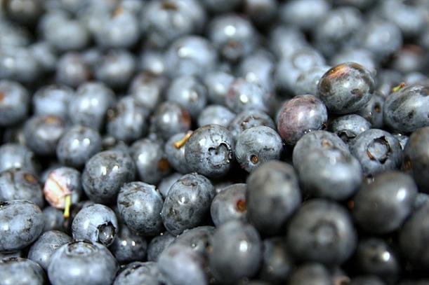 Blueberries_closeup,_February_2009