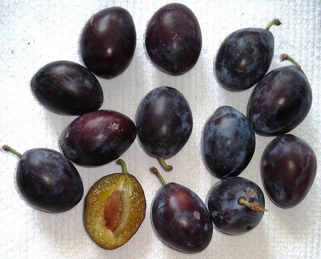 Prunus_-_Hauszwetschge
