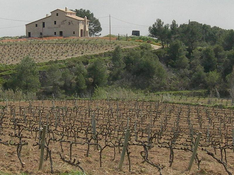 """Cava country"" i Spanien- (Foto: Wikimedia Commons)"