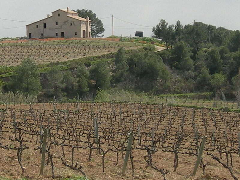 """Cava country"" i Spanien- (Foto: Wikimedia Commons)"