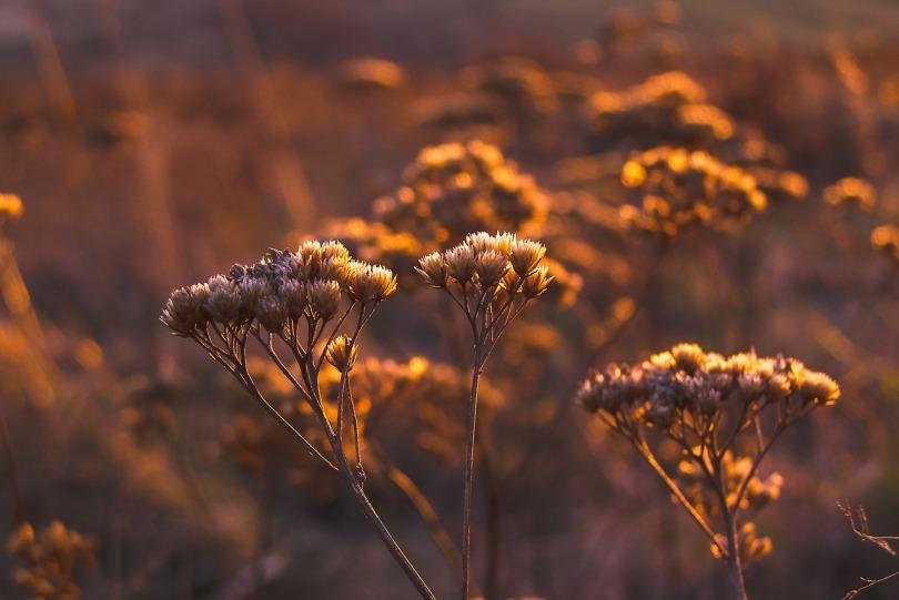 autumn-1738708_1280