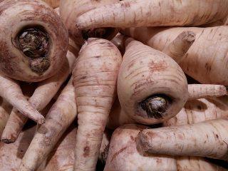 Gott i repris: Gräddig rotfruktsgratäng