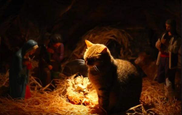 Katter i krubbor…